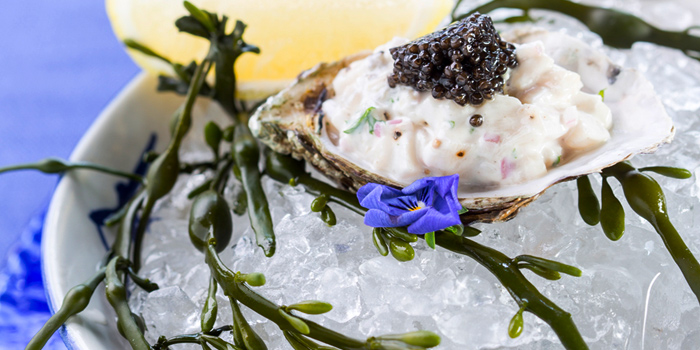 Hamachi Fish with Oyster Tartare from Blue Sky Rooftop Bar & Dining at Central Plaza Ladprao, Bangkok