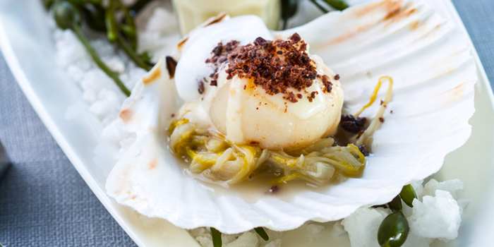 Scallops with Shredded Endives from Blue Sky Rooftop Bar & Dining at Central Plaza Ladprao, Bangkok