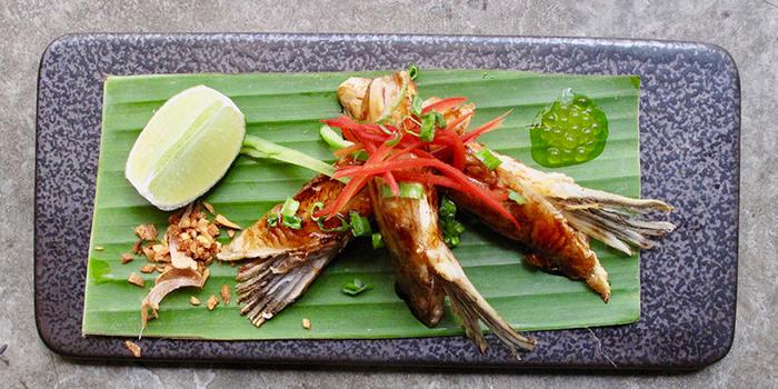Salmon Belly with Yuzu, Fugazi, Kennedy Town, Hong Kong