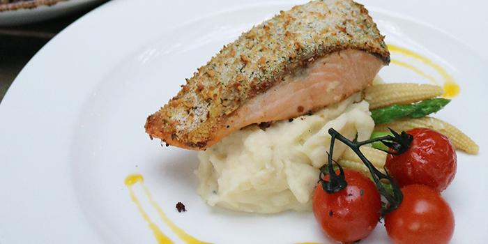 Lunch Promotion Salmon from Stärker Bistro (Zhongshan Park) in Novena, Singapore