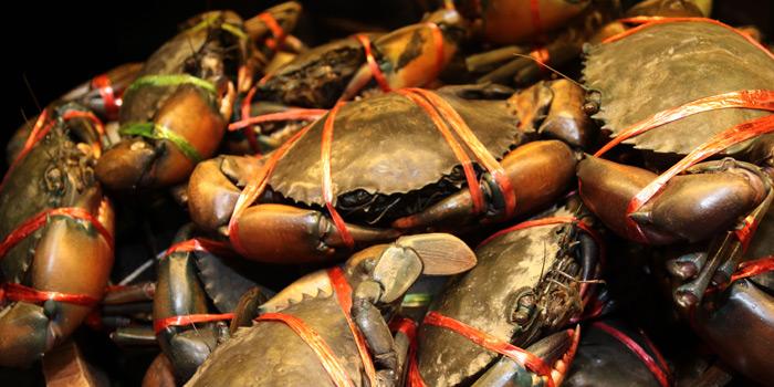 Fresh Crabs from Praya Kitchen at Marriott Bangkok Hotel The Surawongse Surawong Road, Si Phraya Bangrak, Bangkok