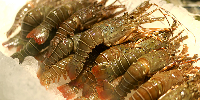 Lobsters from Thai Tanic Live Seafood Hotpot in Outram, Singapore