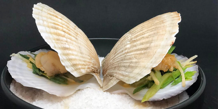 Shell from 23 Restaurant and Club in Caherng Talay, Phuket, Thailand.