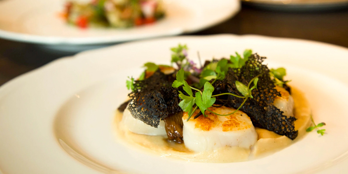 Hokkaido Scallops with Finferli Mushrooms, Truffle and Parsley Root from Aura at National Gallery Singapore in City Hall, Singapore