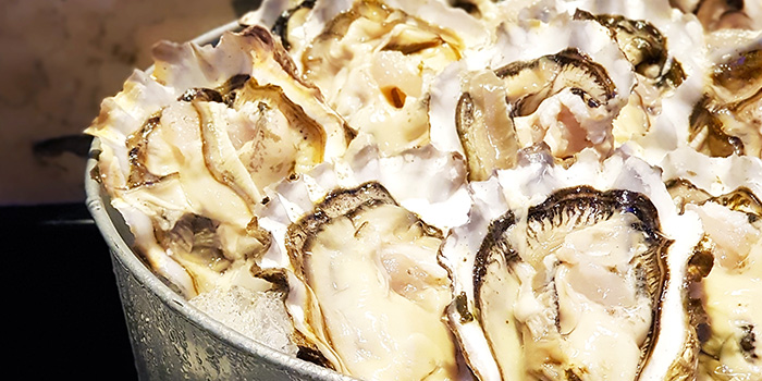 US Oysters from The Square Restaurant in Novotel Singapore Clarke Quay, in Clarke Quay, Singapore