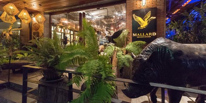 Ambience of Mallard at 16 Soi Sukhumvit 49 Khlong Tan Nuea, Watthana Bangkok