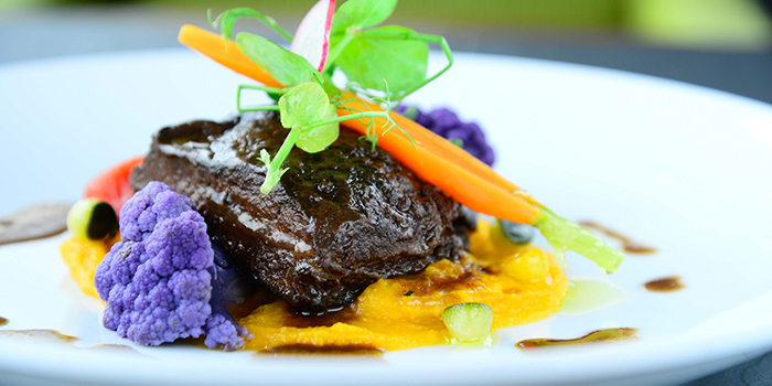 Slow Cooked Wagyu Beef Cheek with Barolo Red Wine Sauce on Mashed Pumpkin, Cucina, Tsim Sha Tsui, Hong Kong
