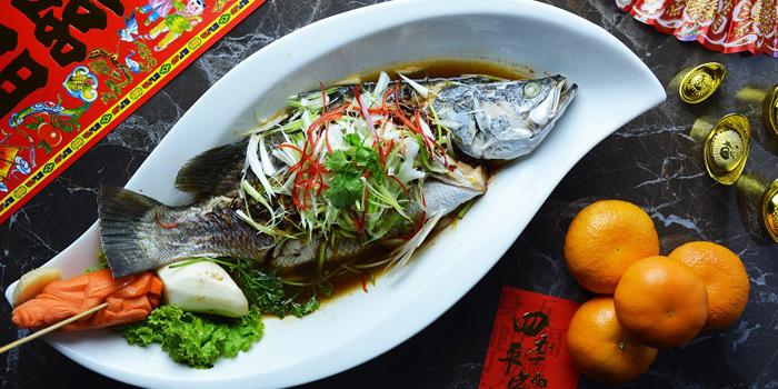 Steamed Snow Fish in Soya Sauce from The Golden Palace at Windsor Suite Hotel Soi Sukhumvit 20, Sukhumvit Rd Khlong Toei Nuea, Watthana Bangkok