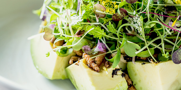 Avocado Salad from One-Ninety at Four Seasons Hotel Singapore in Orchard Road, Singapore