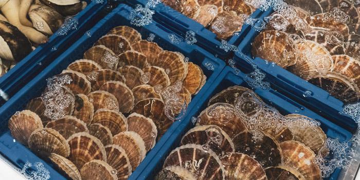 Fresh Hotate from Shinsen Fish Market at 163/6 Soi Sukhumvit 39 Klongton Nua, Wattana Bangkok