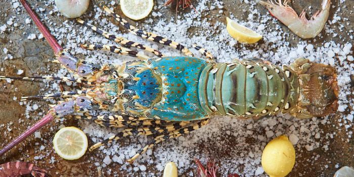 Lobster of Kan Eang@pier in Chalong, Phuket, Thailand