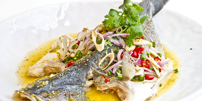 Steamed Seabass in Thai Sauce from Gin Khao (SAFRA Tampines) in Tampines, Singapore