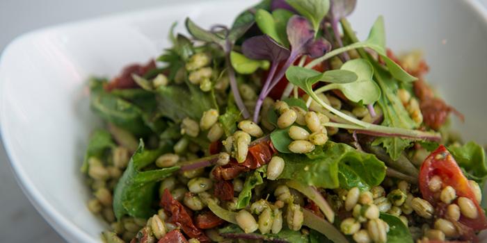 Barley Salad, Amalfitana Artisan Pizza Bar, Repulse Bay, Hong Kong
