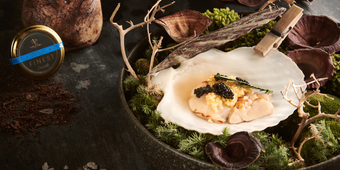 Scallop Tasting Menu from Baltic Blunos at 129 Sukhumvit 53 (Thonglor 9) Klongton-nua, Wattana Bangkok