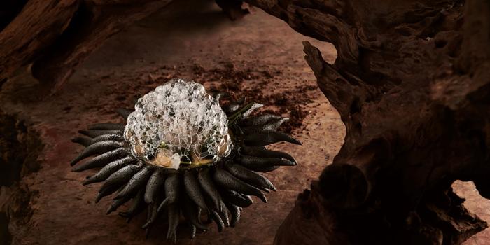 Sea urchin Tasting Menu from Baltic Blunos at 129 Sukhumvit 53 (Thonglor 9) Klongton-nua, Wattana Bangkok