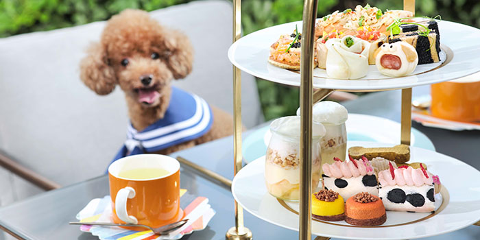 Paws for Tea Group, Cotton Tree Terrace, Central, Hong Kong