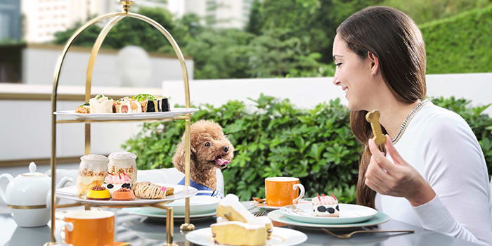 Paws for Tea, Cotton Tree Terrace, Central, Hong Kong