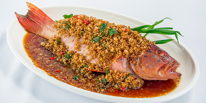 Steamed Red Grouper with Caipo and Garlic from 566 Seafood & Beer Garden At Mandai Hill in Woodlands, Singapore