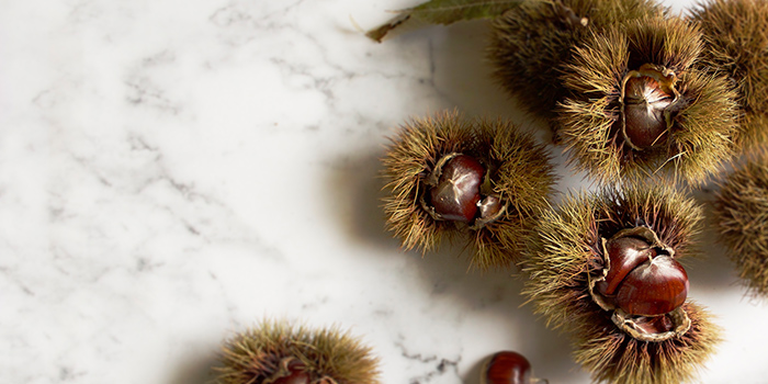 Chestnuts from Art at National Gallery in City Hall, Singapore