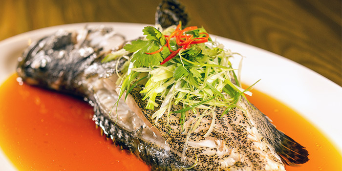 Steamed Fish from Char in Jalan Besar, Singapore