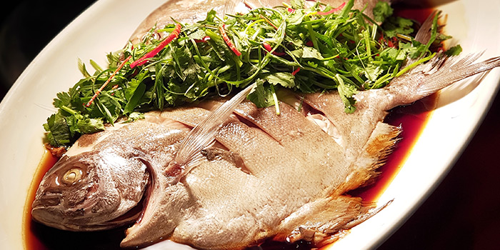 HK Style Fish (8 Jan to 8 Feb) from The Square Restaurant in Novotel Singapore Clarke Quay, in Clarke Quay, Singapore