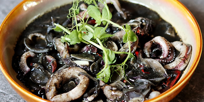 Squid Ink Squid from Quentin