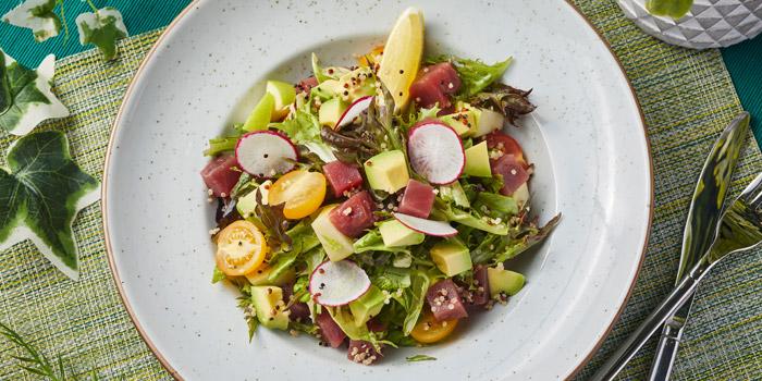 Tuna Salad Bowl, Glasshouse Greenery, Tsim Sha Tsui, Hong Kong