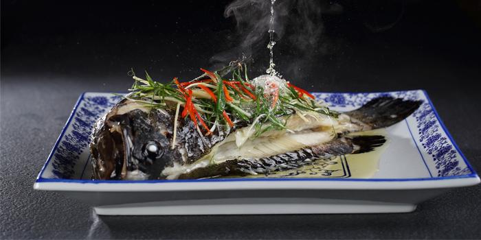 Steam Fish, Café Lantau, Tung Chung, Hong Kong